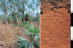 Red Kandosol soil profile in the Darwin district, Northern Territory