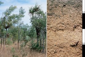Brown Kandosol soil profile in the Darwin district, Northern Territory