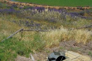 Dethridge wheels measuring water consumption for rice crop in the Murrumbidgee Irrigation Area. NSW.