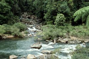 Beatrice River, North Queensland