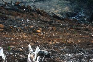 Aftermath debris