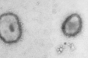 Horse and Cattle Viruses