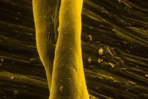 Coloured Image of Polymer Bonded Fibres