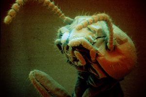 Close-up of a Termite