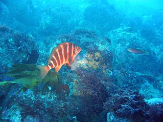 Le réchauffement des océans fatal